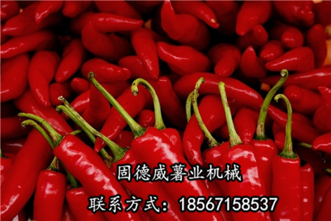 New Good Way of Chongqing Chilli King Zhang Chunhua